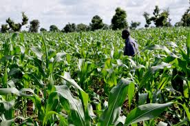 Obiano to increase agricultural funding in 2017