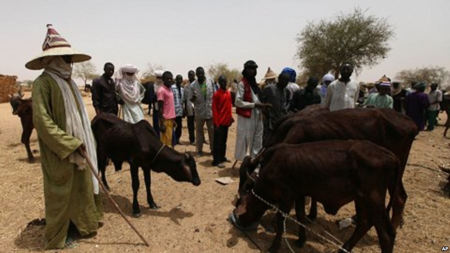 Cattle breeders cry foul over murder of Fulani man in Kaduna