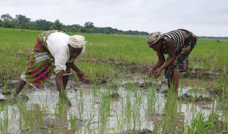 Nigerian farmers urged to go organic, improve quality of produce