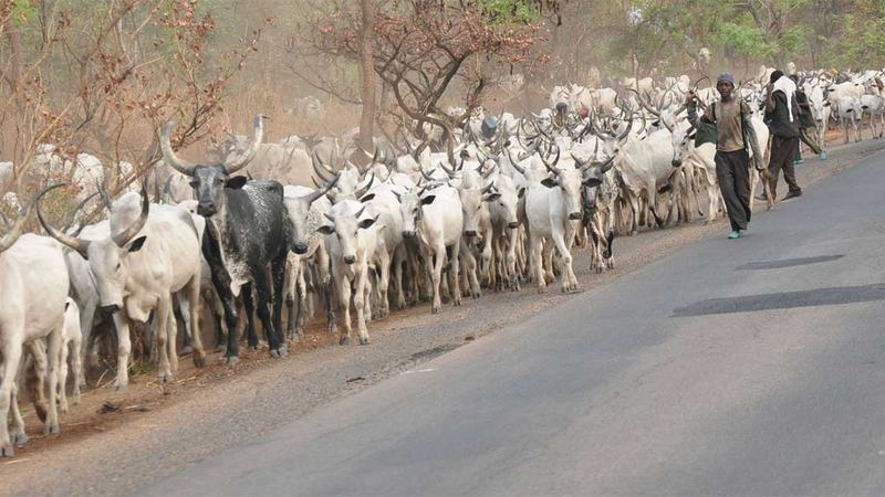 Adamawa community accuses herdsmen of killing leader
