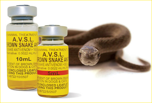 Anti-Venon vials arrives Nigeria – Relief for snakebite victims