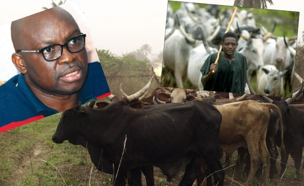 "killing of cows: ""Fayose playing with fire"" – Miyetti Allah"