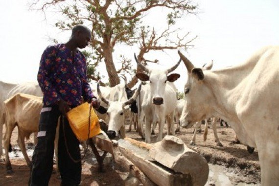 Herdsmen agree to graze within palm areas of Bayelsa
