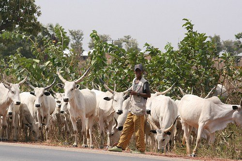 Farmers/herdsmen sign peace pact