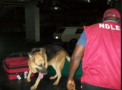 Adamawa NDLEA intercepts cars laden with 70.653kg Of drugs