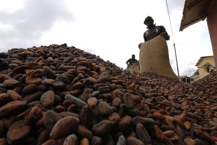 Cocoa exporters decry government neglect