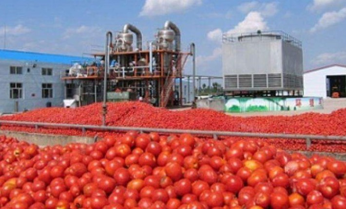Dangote tomato factory resumes production February