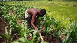 Nigerian youths urged to consider Agric opportunities