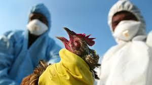 Commissioner allays fears of bird flu in Kwara