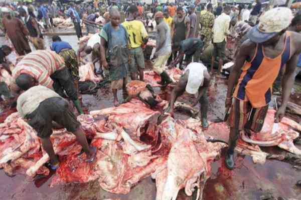 Lagos clamps down on illegal abattoirs, cattle markets