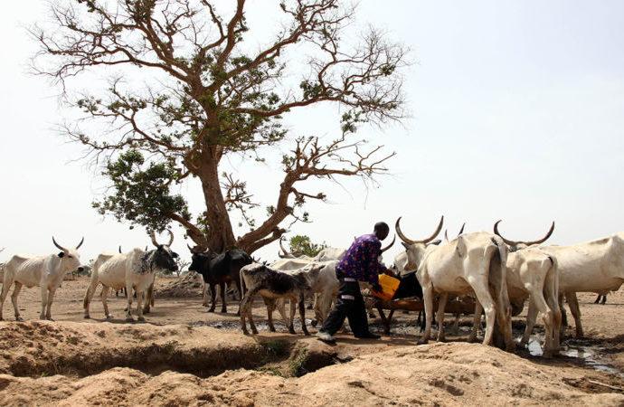 Fulani herdsmen kill one, injure three in new Adamawa attack