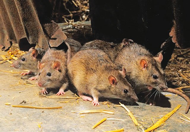 Lassa fever kills four in Bauchi – Health Commissioner