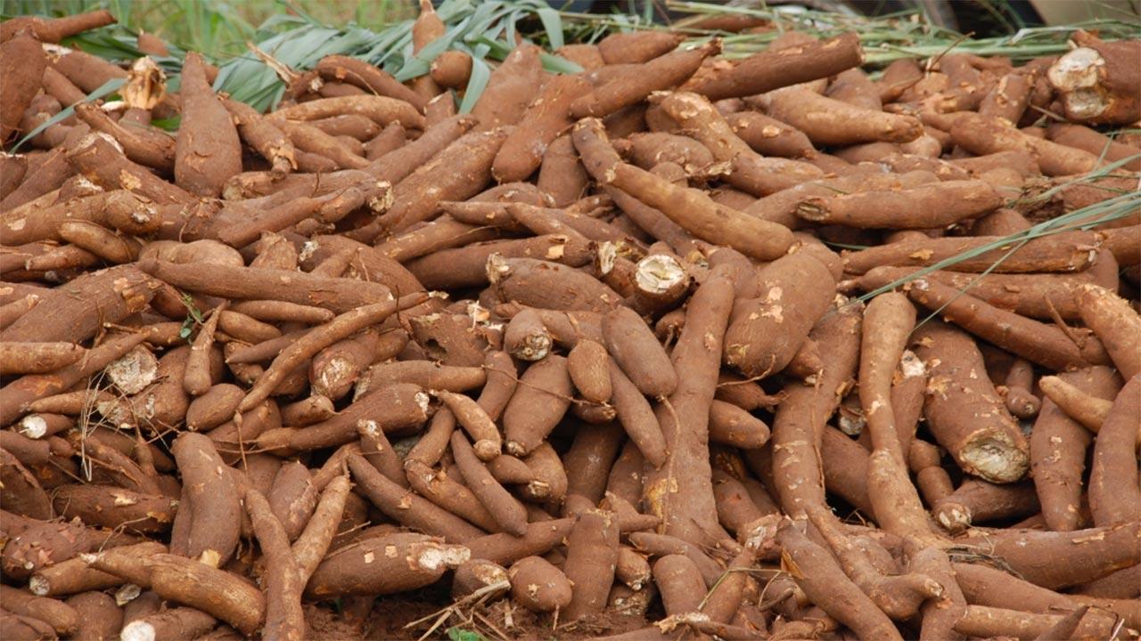 Ogun presents N36m to cassava farmers