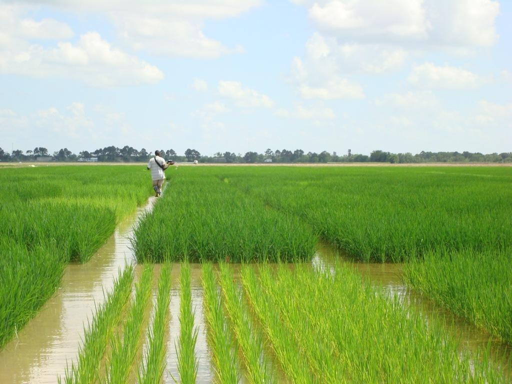 Sokoto Spends N9.2bn on Agriculture in Two Years