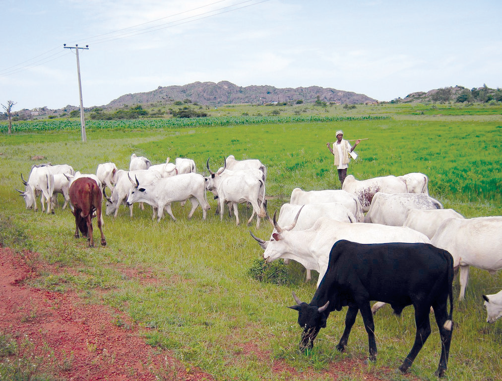 FAO urges FG to promote grazing reserves