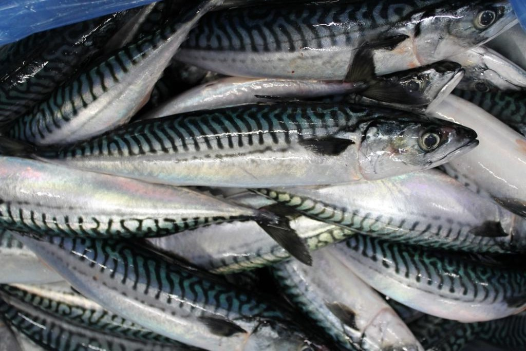 Norway, Nigeria seek more market for fishery products
