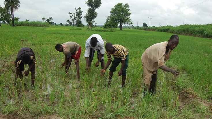 Ogun govt. set to give land, seedlings to corps members willing to farm