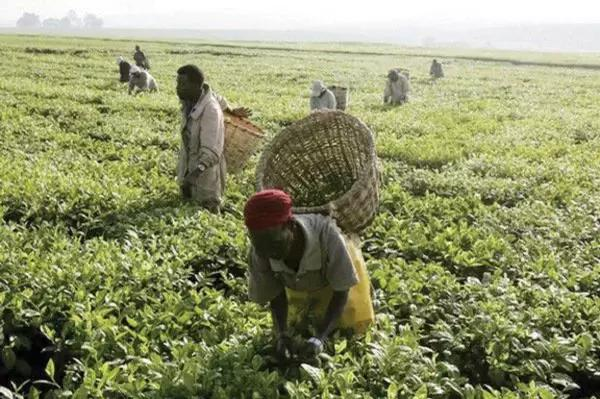 Abuja farmers hopeful of better yields in 2017