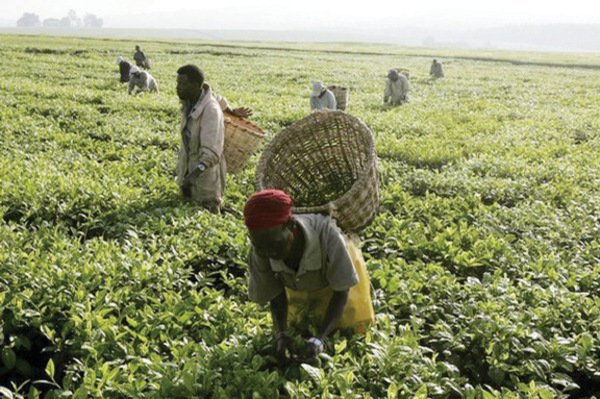 Bank of Agriculture Injects N9bn into S-east States