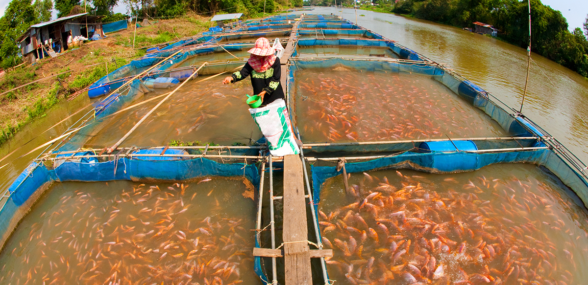 Lawmaker trains 160 youths in fish farming, others