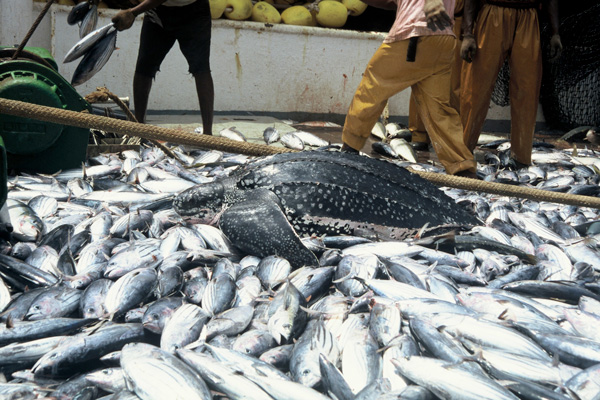 Army bans commercial transportation, sale of fish in Borno