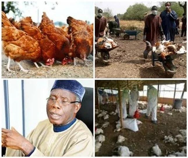 Avian Influenza outbreak hits Abuja, six states