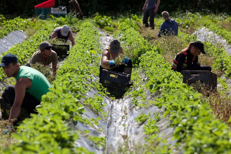 Brexit hurts UK Vegetable, fruit farmers