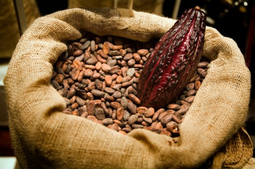 Osun Cocoa firm starts production