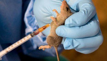 Ondo confirms five cases of Lassa fever