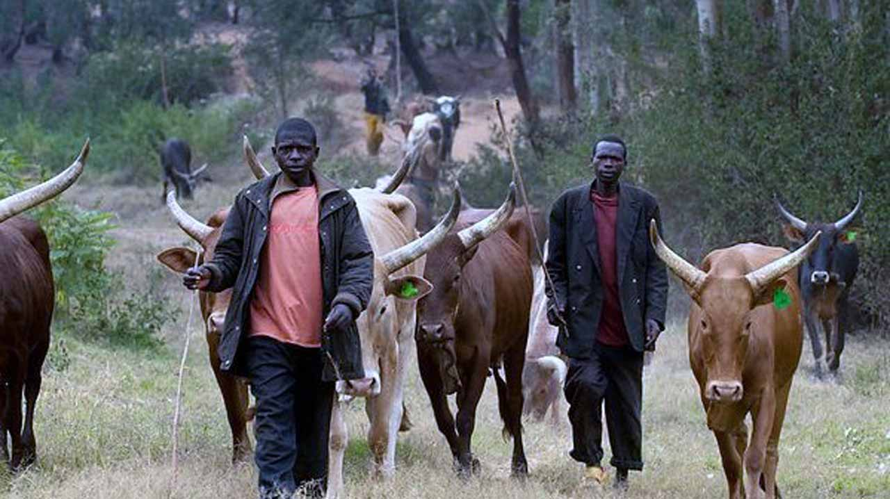 Cattle breeders lament attack by Southern Kaduna natives
