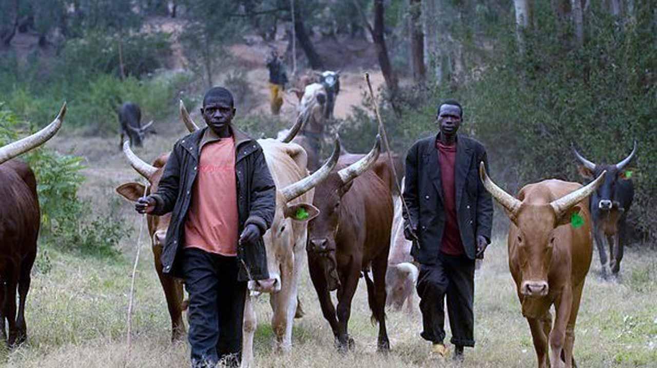 Fulani militiamen attack Taraba community, kill 4