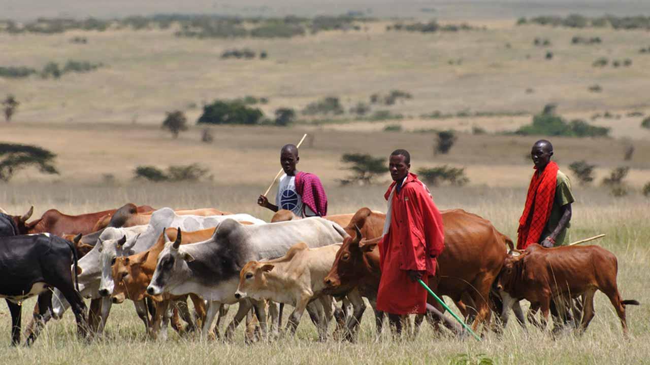 Taraba farmers rally in support of anti-grazing bill