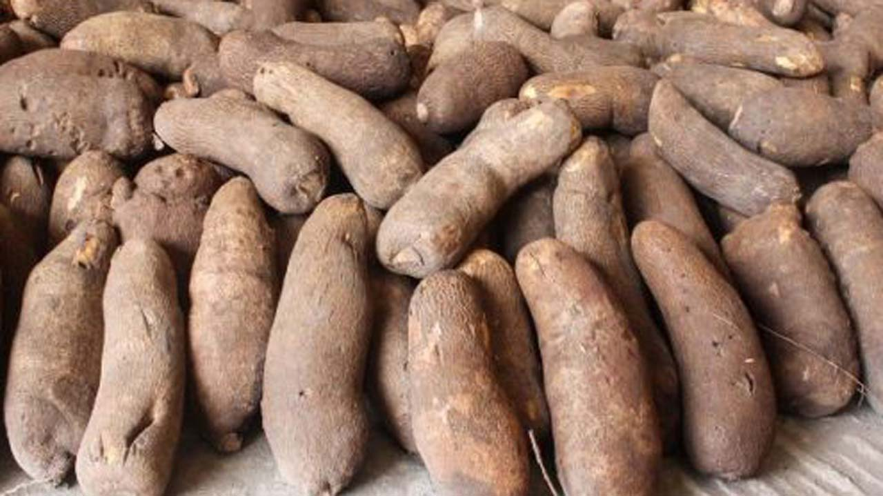 Nigeria to begin yam export to Europe, U.S. June 29