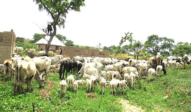 Benue state officially bans open grazing