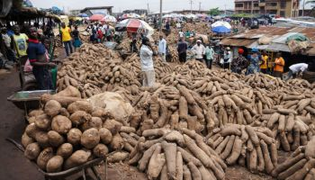 Benue govt to help yam farmers in new agricultural policy