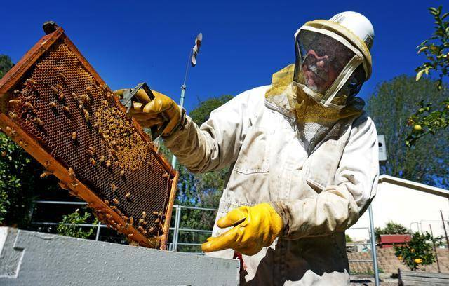 South African bee farmers rebuild business after fire