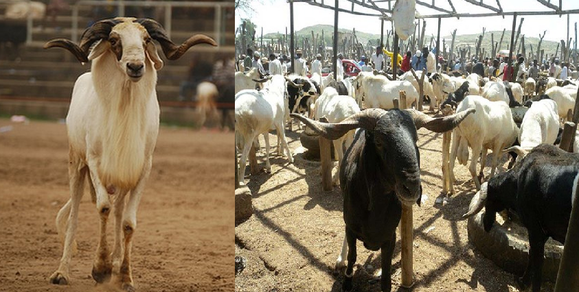 Breaking: Sultan declares September 1 as Sallah day