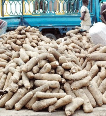 Out of poor quality United States rejects Nigerian Yams