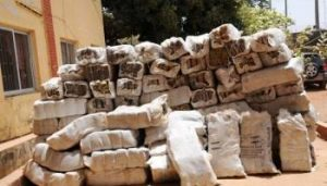 Nigerian Customs intercepts Cannabis contraband in Sokoto