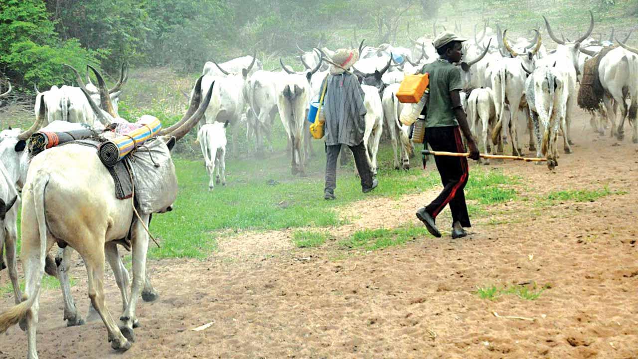 Suspected Kikan youths kill 30 herdsmen in Adamawa State