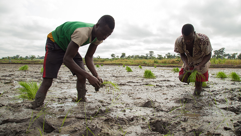 Ghana signs deal with Hungary to improve agricultural production