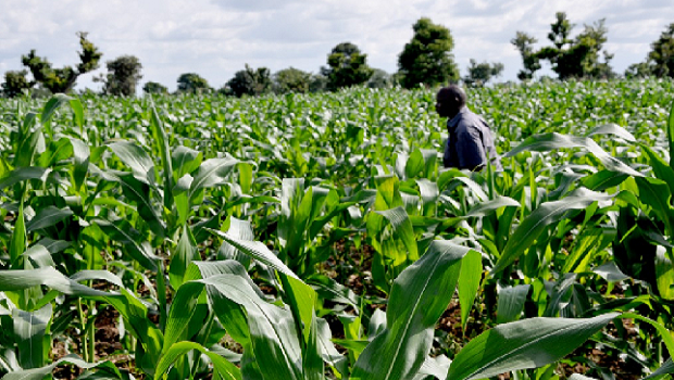 CBN to give farmers 5% interest loan
