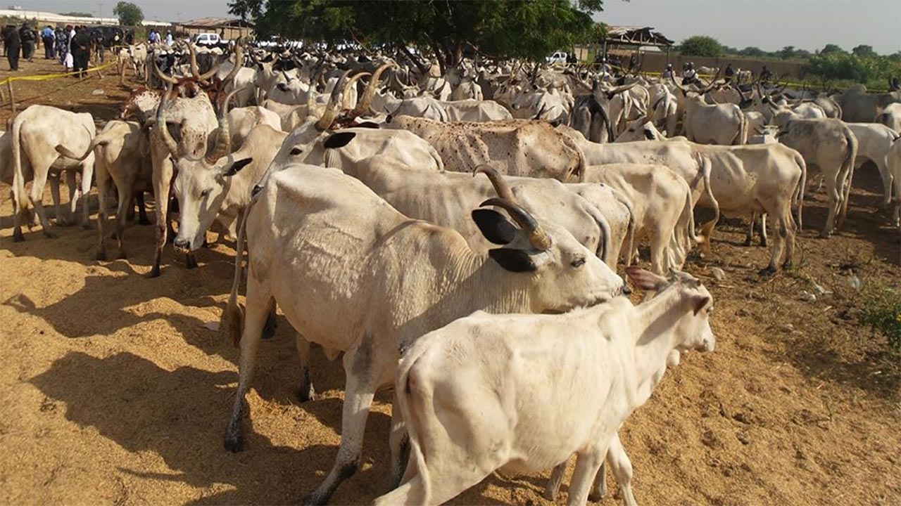 Fulani group calls for creation of Livestock ministry