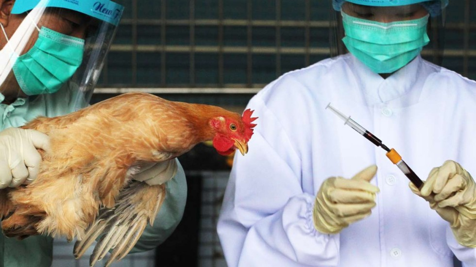 Bird flu found in wild birds in UK's Dorset but risk to humans, poultry low