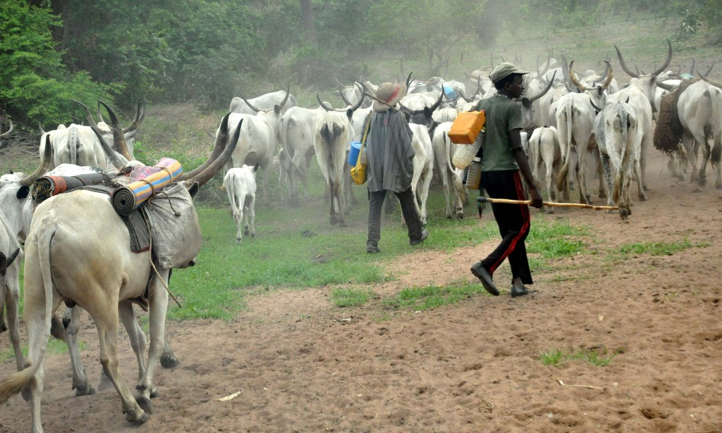 Two herders missing, 73 cows stolen as rustlers attack Nasarawa Community