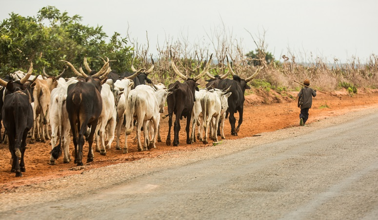 Cattle rustlers attack Nasarawa village
