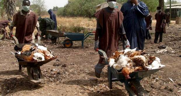 BirdFlu: FG compensate affected farmers with N42M