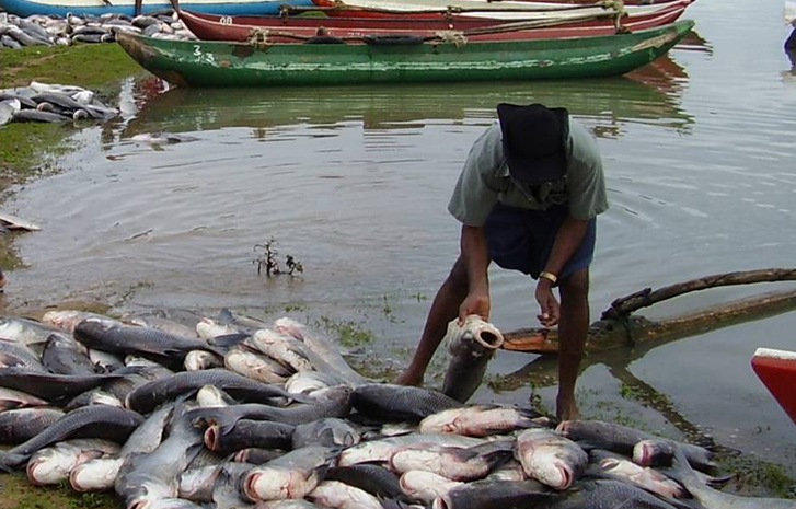 Nigeria's fish production dropped in 2017 – Survey