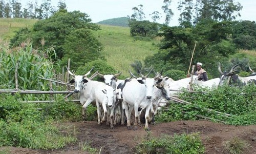 Anambra Assembly passes anti-open grazing bill for second reading