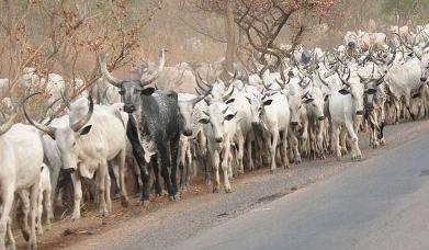 NEC bans Open Grazing as herdsmen attacks persist